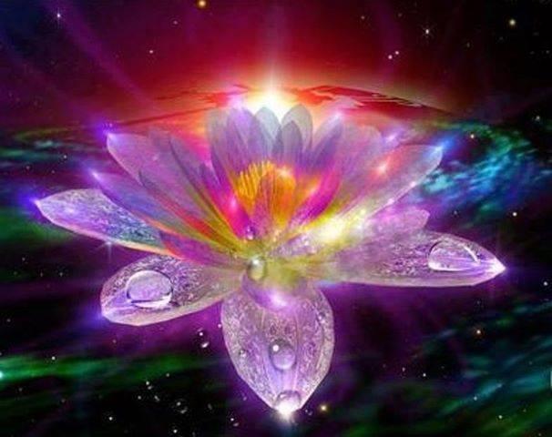 lotus-ray